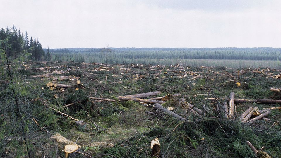 Logging record in Finland: 100 million trees harvested last year