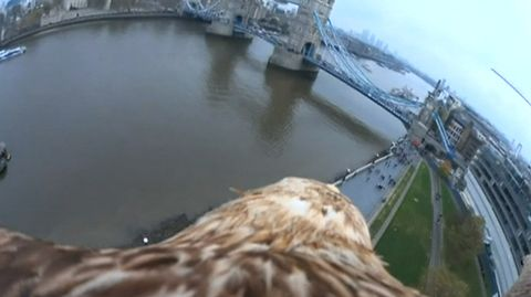 Video: Kotkan selkään kiinnitetyn kameran ottama kuva.