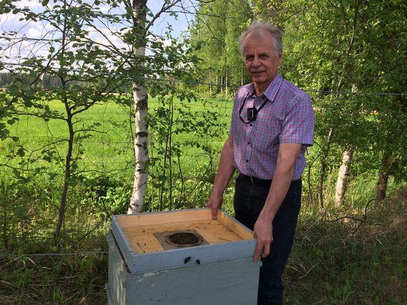 Mikkeliläinen Arto Nieminen on toiminut mehiläistenhoitajana yli vuosikymmenen. Mehiläisten lukuisten pistojen myötä niille pistoillekin on tullutv jo immuuniksi.