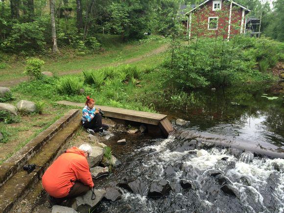 Luontokuvaaja Paavo Hamusen lähikuvauskurssin opiskelijat kuvaavat Mikkelissä, Urpolan luonnonsuojelualueella.