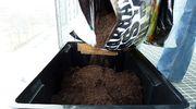 Perunalaatikkoon kaadetaan multaa pussista.