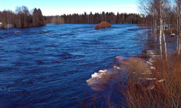 Kiiminkijoki virtaa vuolaana.