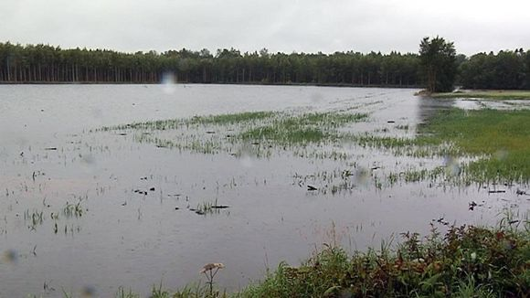 A watery field in the Siikajoki region. 