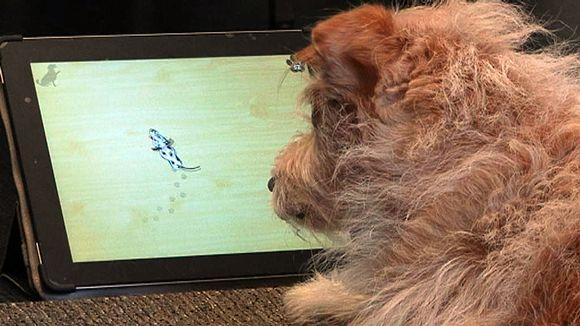 Koira pelaa taulutietokoneella