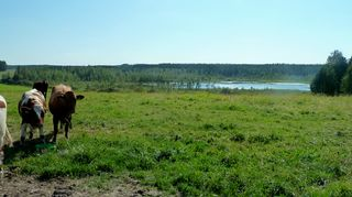 Kurkelanjärvi Pyhännällä sijaitsee mäkien keskellä.