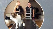 Miuku-kissa Jenni Yli-Tainion (vas.) agility-radalla. Niina Koljonen tarkkailee, onnistuuko myös pyöreä läpimenoeste.