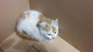 Ambulanssista löytynyt kissa.