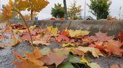 Puusta pudonneita lehtiä parkkipaikalla.