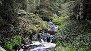 Metsämaisema, jonka läpi virtaa puro.
