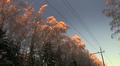 Tykkylumi kaatoi puita sähkölinjoille Vaasan seudulla.