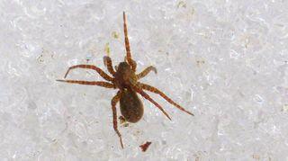 Hämähäkki jäällä (sääkuva)