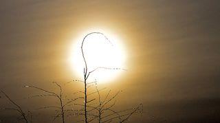 Kuvattu Alavus 6-4-2015. Maantaina aamusta heti pilviä tuli taivaalle. Auringo kuiteskin näkyi pilvien läpi.