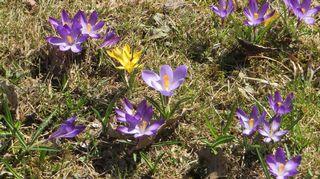 Kukkia nurmikolla