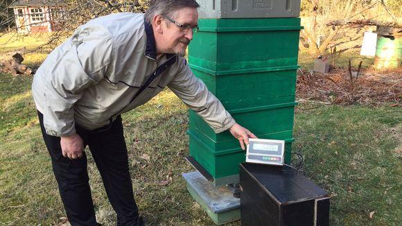 Mikko Myllykoski mehiläispesä