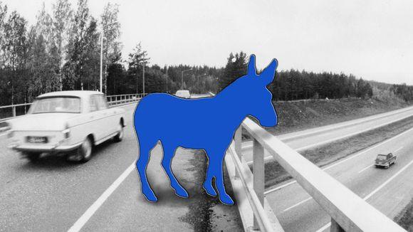 Sininen aasi sillalla.