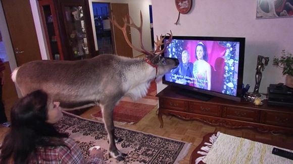 Video: Aatu katsoo televisiota.