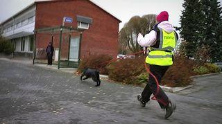 ID-koira etsintäharjoituksessa