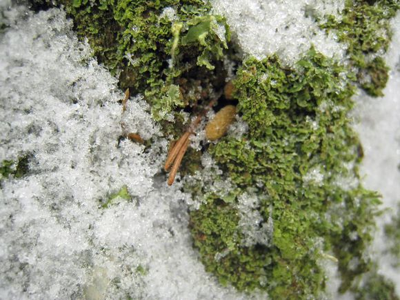 Papanoita lumen ja sammaleen keskellä