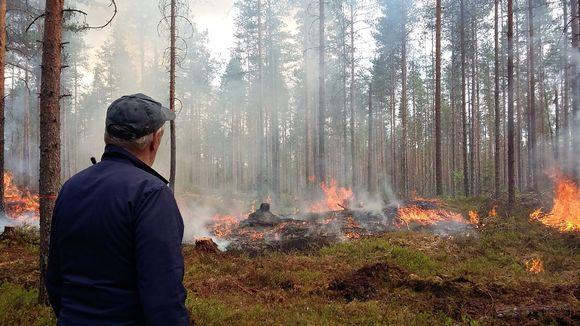 Kulotus Helvetinjärven kansallispuistossa