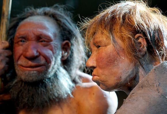 Neandertalin mies ja nainen rekonstruoituina Metmannin museossa.