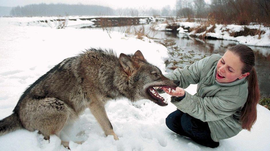 Euraasian Koira