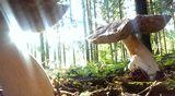 Herkkutatteja metsässä.