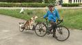 Mies lähdössä pyöräilemään, koira istuu pyörän peräkärryssä.