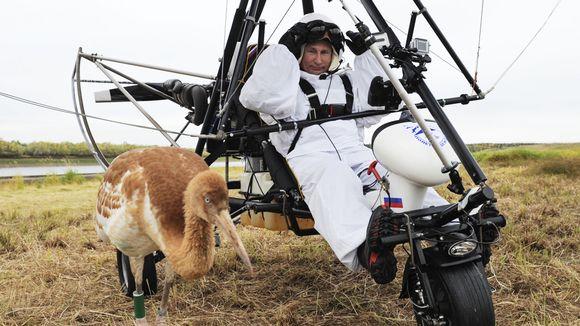 Video: Vladimir Putin osallistui Toivon lento -tapahtumaan, jonka tarkoituksena on suojella erittäin uhanalaista kurkilajia.