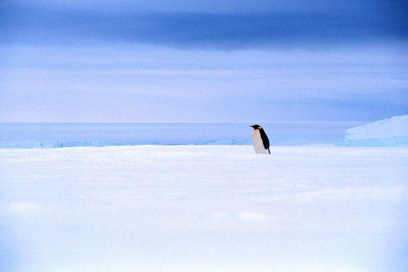 pingviini jäätiköllä