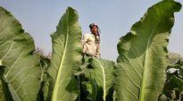 Ilmastonmuutos Intia Maatalous Kuivuus