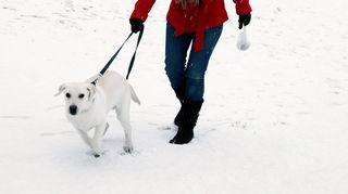Nainen ulkoiluttaa koiraa.