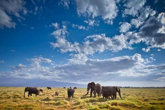 Amboselin kansallispuisto 8. lokakuuta 2013.