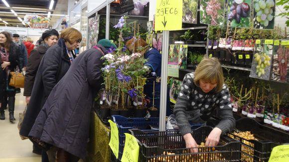Moskovan puutarhamessuilla valmistaudutaan toukokuun vapaille