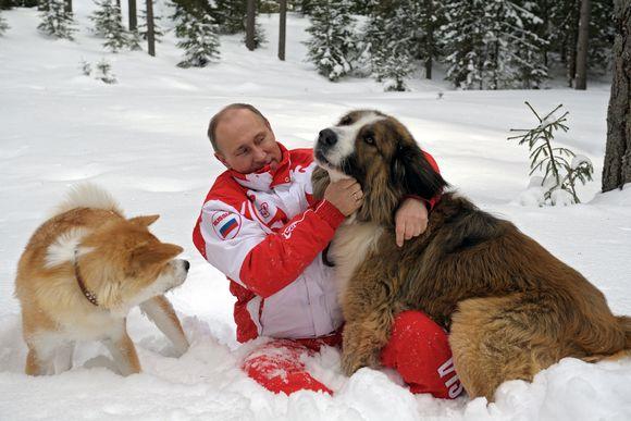 Punavalkoiseen ulkoilupukuun pukeutunut Putin leikkii kahden koiran kanssa lumisessa metsässä.