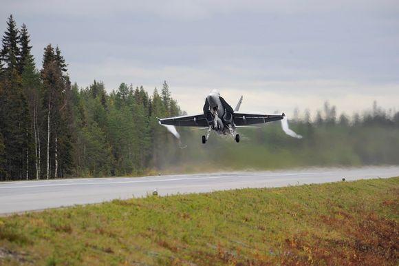 Hornet laskeutumassa tielle, jota reunustaa mets?.