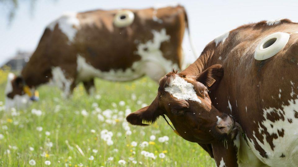 Eläinten hyvinvointi tulee opetussuunnitelmaan vuonna 2016.