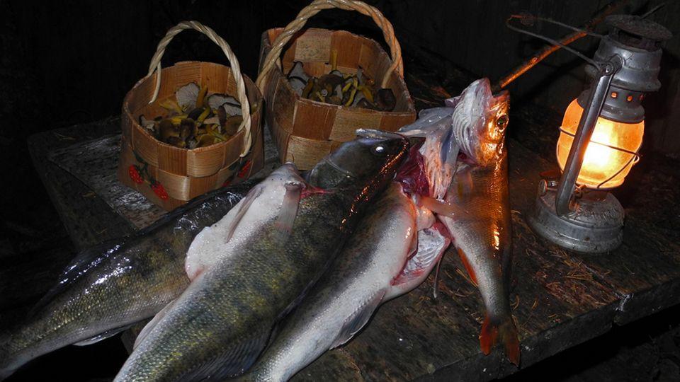Luonto-Suomen kalaruokailta - lähetä oma kysymyksesi | Yle Radio Suomi | yle.fi