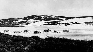 Arktisia unelmia