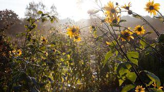 siirtolapuutarha syksyllä