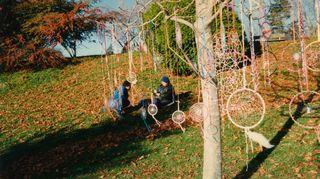Unisieppareita roikkuu puissa, kanadalaisessa kaupunkipuistossa.