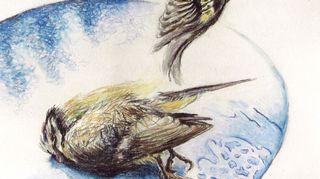 Fredin piirrustus linnuista terassipöydällä