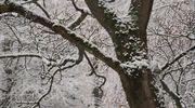 Sääkuva: Ensilumen kuorruttamia puita Lahdessa