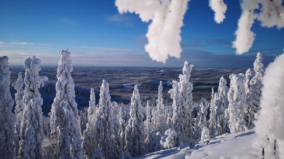 Sääkuva: Koli 14.2.2021, luminen maisema Kolilta. Puut ovat tykkylumen peittämiä.