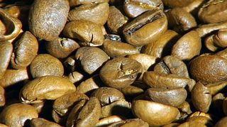 Kahvinpapuja
