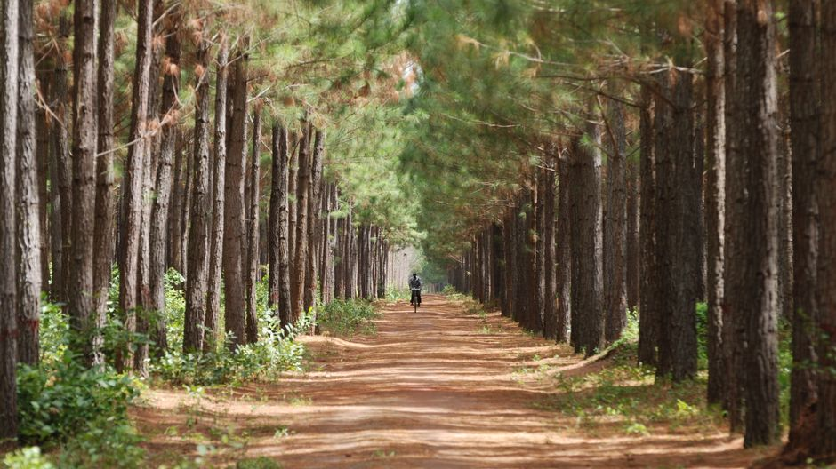 Mies pyöräilee tiellä puiden siimeksessä.