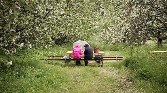 Kaksi naista istuu puiston penkillä vesisateessa.