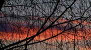 Punainen taivas oksien takana.