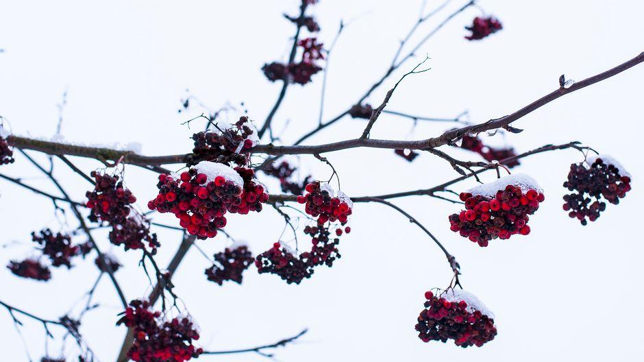 jouluruoka 2018 jyväskylä Most of Finland set for a white Christmas | Yle Uutiset | yle.fi jouluruoka 2018 jyväskylä