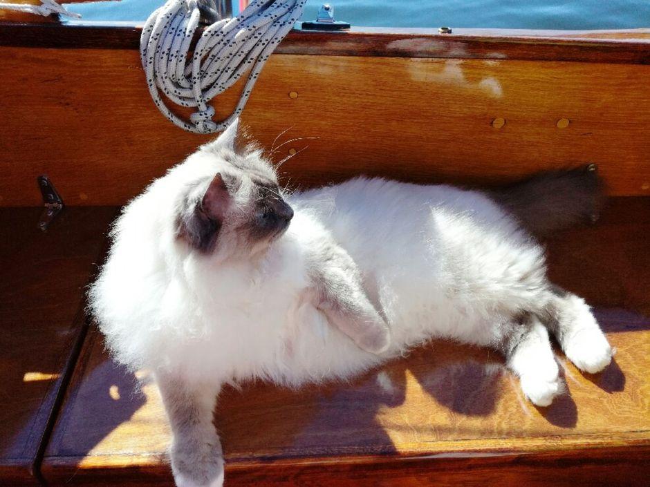 Purjehduskissa Jussi lekottelee veneen istumalaatikossa