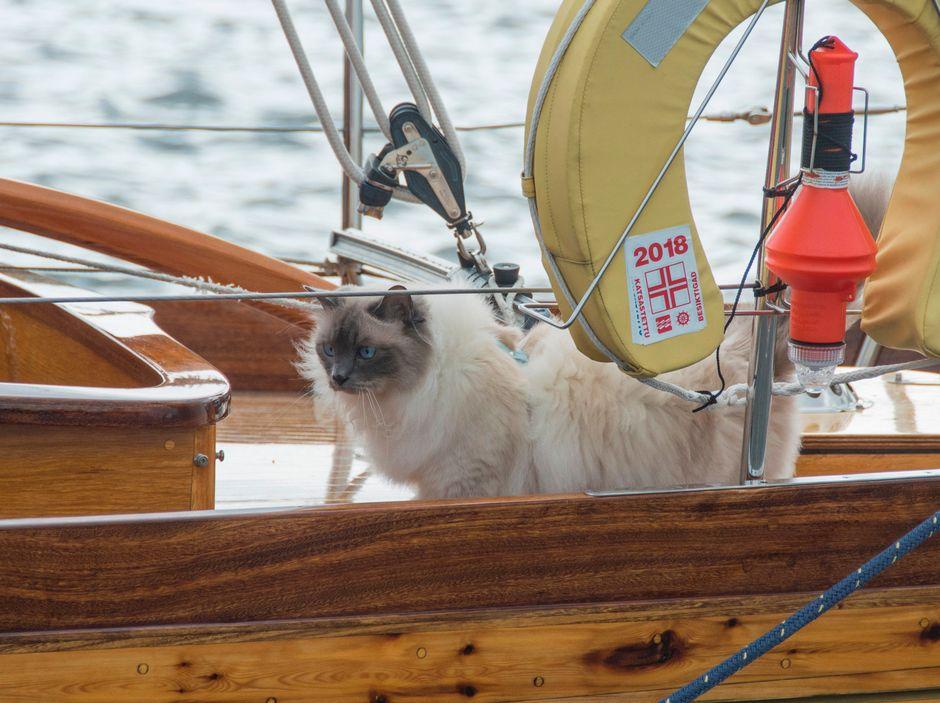 Jussi-kissa tuulisen veneen kannella.